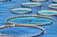مجلس الوزراء: وقف تنفيذ مشروع الاستزراع السمكي شرق التفريعة