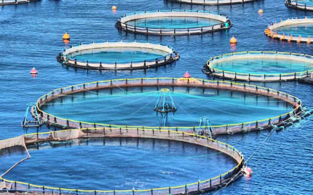 وفد من معهد «علوم البحار» يزور مشروع الاستزراع السمكي بكفر الشيخ