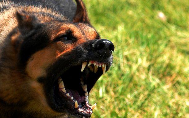 بدء تطبيق أول إتفاق للحد من الكلاب الضالة في مدينة الشيخ زايد بالإتفاق مع إتحاد الرفق بالحيوان
