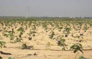 وزير الزراعة يكلف