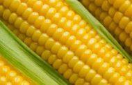الزراعة : ارتفاع مساحات المحصول الصيفي المنزرعة الى ٢ مليون