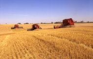روسيا: إنتاج أكثر من 76 مليون طن حبوب العام الحالي...وتخطط لزيادتها إلي 118 مليونا الموسم المقبل
