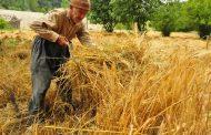 اليوم...مصر تعلن نتائج عروض إستيراد كميات غير محدودة من القمح