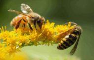 وثائقى .. لماذا يموت النحل ؟