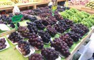 الزراعة فتح أسواق جديدة أمام الصادرات الزراعية واشادة دولية بالمنتجات المصرية