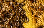 عاجل... الاتحاد الأوروبي يحظر استخدام مبيدات حشرية تهدد النحل