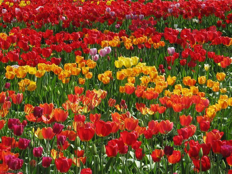 الجمعية العلمية للزهور تنظم مؤتمرا للإستفادة من نباتات الزينة في تنسيق المناطق الحضرية فبراير المقبل