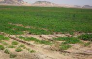 عاجل...الحكومة تعتمد إجراءات جديدة لتسهيل الحصول علي أراضي المشروعات الزراعية