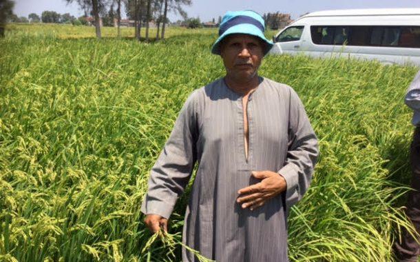 الزراعة تتابع محصول القطن وتحصر زراعات الأرز المخالفة