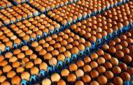 فضيحة البيض: 700 ألف بيضة ملوثة في بريطانيا
