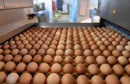 فضيحة البيض الملوث تصل شرق آسيا