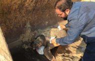 محمية أشتوم الجميل ببورسعيد: وفاة