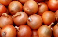 لجنة المبيدات ردا علي القرار السعودي: أوراق البصل