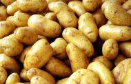معا من أجل البطاطس...كيف تختار الأفضل عند الشراء للحصول علي فوائدها الصحية؟