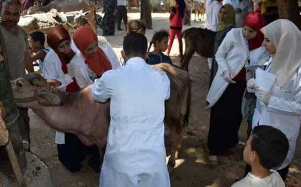 السبت.. انطلاق الحملة القومية للتحصين ضد الحمى القلاعية والوادي المتصدع بالمنيا