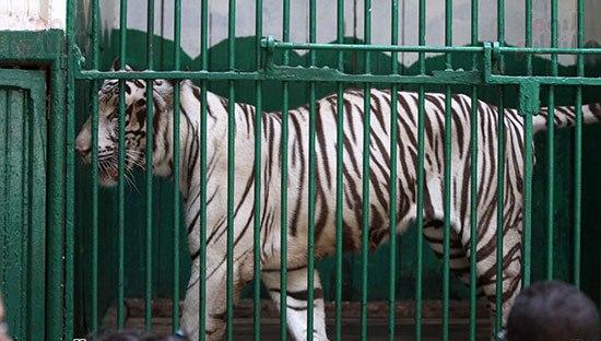 حسين فهمي والحاج متولي وعنتر وحسونة أحدث عروض حديقة الحيوان إحتفالا بشم النسيم