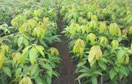 الزراعة توافق علي تصدير شتلات  مانجو وموالح وفراولة وكمثري ورمان وتفاح لـ 3 دول
