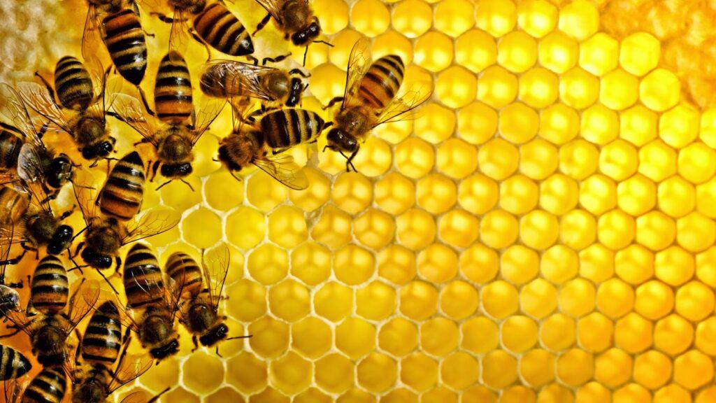 د أحمد جلال يكتب: تاريخ النحل والعسل فى مصر القديمة (الجزء الاول)