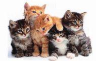 بالفيديو... مبادرة لإنقاذ كلاب وقطط دمشق
