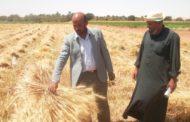 ماذا طلبت وزارة التموين من الفلاحين لإستلام القمح؟