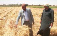 وزير الزراعة: التوسع في الحقول الارشادية إستعدادا لموسم زراعة القمح