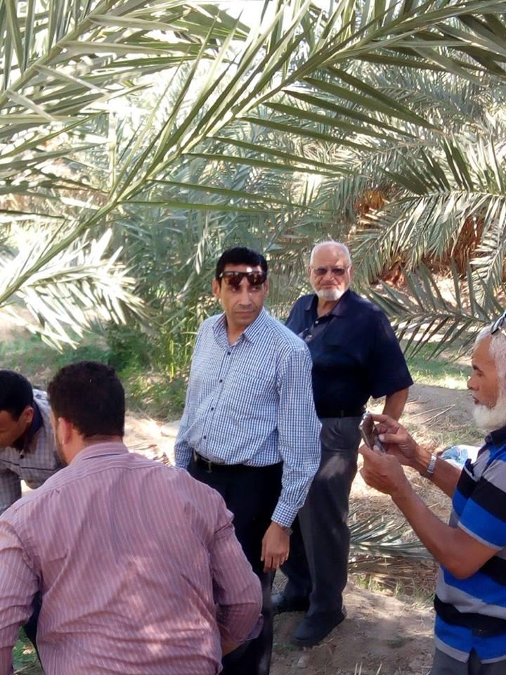 سوسة النخيل تهدد ثروات مصر من نخيل الوادي الجديد قبل مهرجان التمور