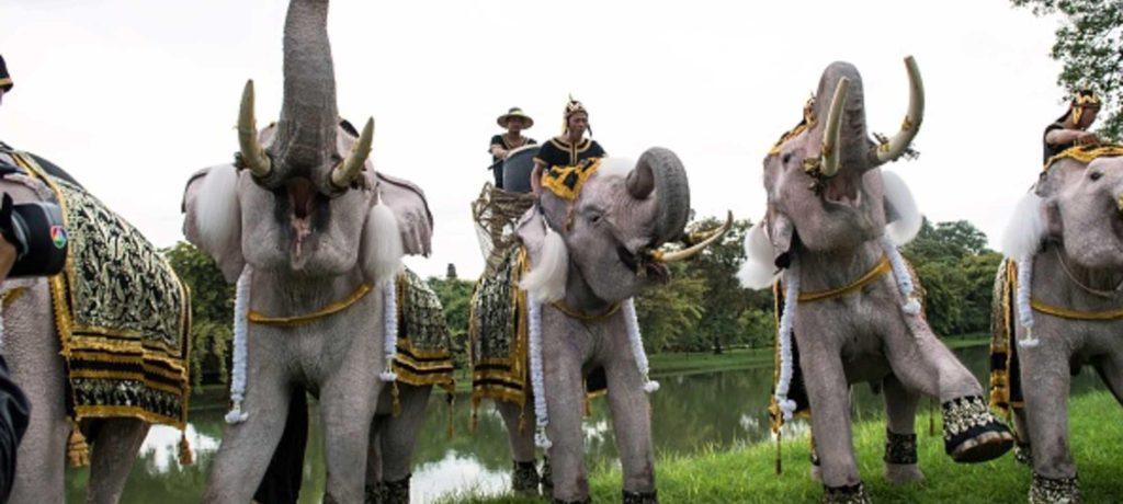 الفيل والحوت ...حيوانات لا يقهرها السرطان (تفاصيل)