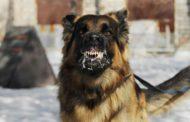 أخطر دراسة علمية: عضة كلب تساوي الموت (تفاصيل)