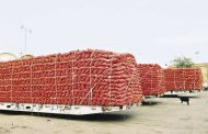 خبراء: الصادرات الزراعية المصرية تعاني من مأذق
