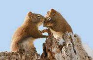 بالصور..  شاهد أجمل صور الحب بين الحيوانات