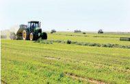 مفاجاة السعودية: زيادة إنتاج القطاع الزراعي رغم حظر محاصيل الأعلاف