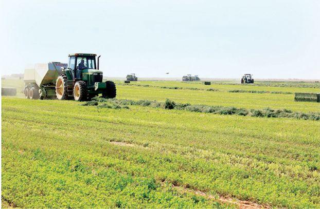 رسميا... السعودية تحظر زراعة البرسيم ومحاصيل الاعلاف لتوفير المياه