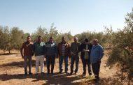 الزراعة: ترصد مشاكل جنوب سيناء... تحتاج إلي 10 الاف شتلة زيتون و5 آلاف شتلة مانجو