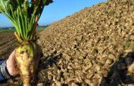 15 فائدة حققتها مصر من تطوير مصانع شركة الدلتا لإنتاج السكر؟