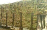 وزير الزراعة: صعوبات تواجه إنتاج تقاوي البنجر محليا..وطرح صنف جديد من القصب الشهر المقبل