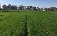خبير زراعي: 10 فوائد لزراعة القمح علي مصاطب...زيادة الإنتاج وتوفير المياه