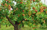 مصر تحتل المركز الثالث بين أكثر الدول المستوردة للتفاح الأوروبي