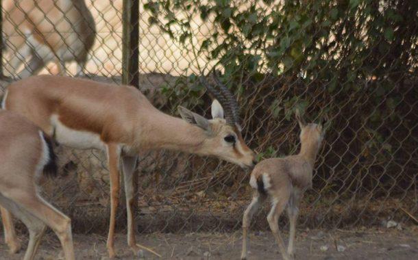 حديقة الحيوان تعلن حصاد مواليد شهر ديسمبر وأول يناير خلال أيام إحتفالا بالعام الجديد