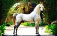 قصة وفاة حصان أبكي الملايين من عشاقه ...تفاصيل اللحظات الاخيرة
