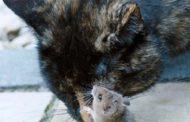 ننشر تفاصيل الحكم بإعدام ديك والقطط التي برأت الفئران