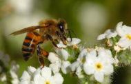 عالم النحل...