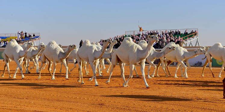 السعودية تحرر غرامات بـ 500 ألف ريال سعودي لمخالفات تتعلق بالرفق بالحيوان