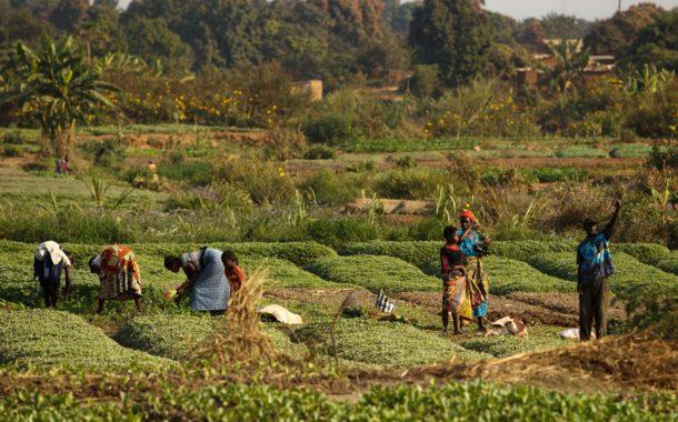 الفاو تستعين بتجربة الصين للإستفادة من مخلفات الدود في تغذية الاسماك وإنتاج الحرير