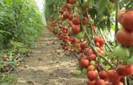 ما هي ضوابط الزراعة العضوية وعلاقتها بالصادرات والصحة؟