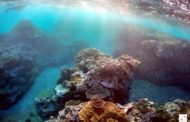 استراليا تمول مشروع الحاجز المرجاني العظيم بـ 379 مليون دولار امريكي
