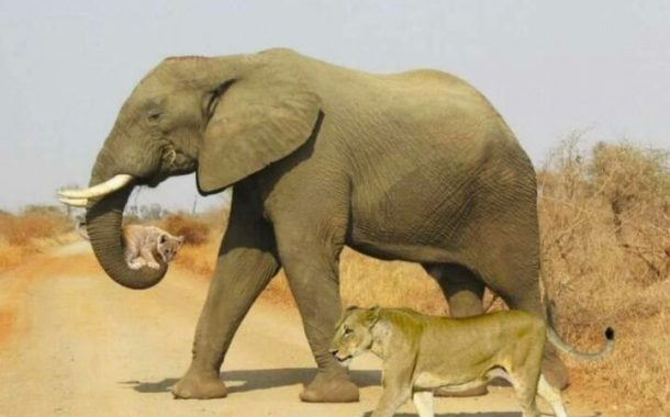مصر تتفاوض مع الهند وزيمبابوي لتوريد 2 فيل لحديقة الحيوان