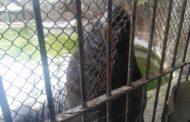برنامج الزراعة لحماية حيوانات وطيور حديقة الحيوان من برد الشتاء (تفاصيل)