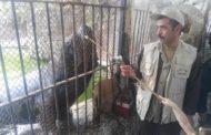 ٧ مواليد جدد في حديقة الحيوان وخطة طوارئ لمنع الازدحام خلال العيد