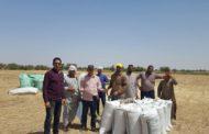 الزراعة: توريد 385 ألف طن قمح لشركات المطاحن والبنك الزراعي والمصرية القابضة