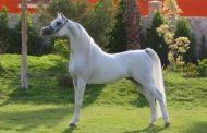 6 نصائح لحماية الخيول من الأمراض المنقولة من الحشرات